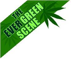 evergreen scene