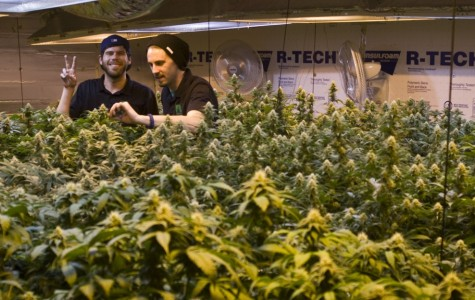 Cannabis business keeps coming to Eburg