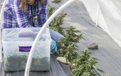Local shops grow better budtenders