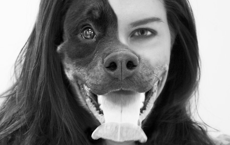 Opinion: I'll never take my dog to any dog park