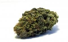Legal marijuana is the way forward