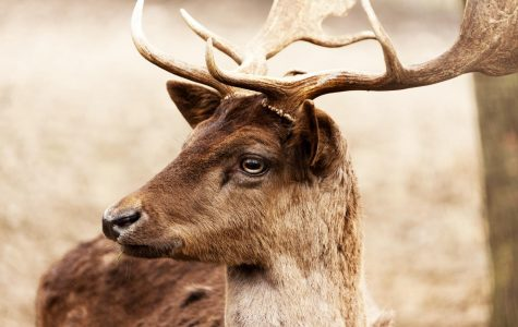 Harsh winter brings changes for hunters