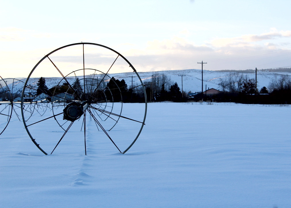 Wheel lines are used to irrigate pastures in preparation for growing seasons. During the winter they stand idle.