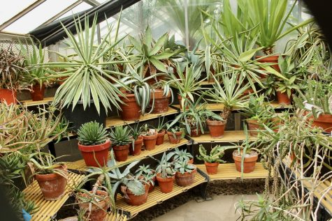Greenhouse grows local appreciation for plants