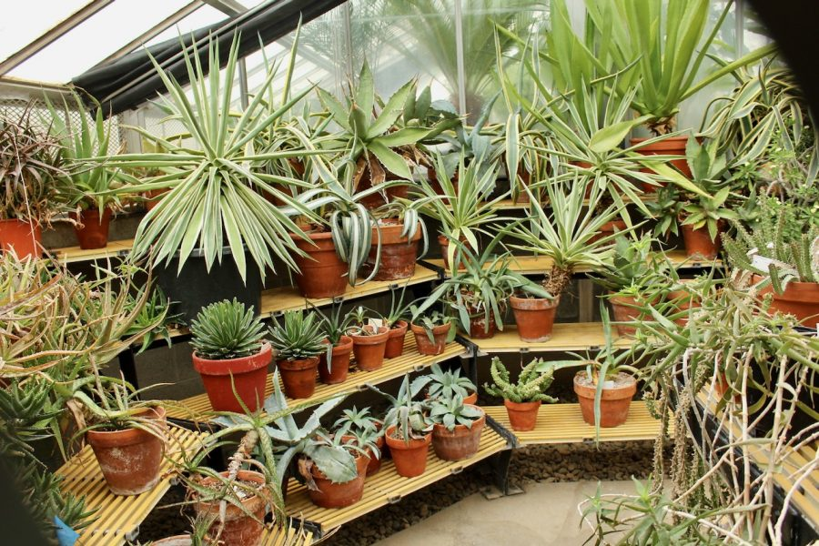 Assorted+potted+plants+growing+in+the+Biology+Greenhouse%2C+located+on+Wildcat+Way.+The+greenhouse+is+open+from+1+P.M.-+3+P.M.+every+Friday.