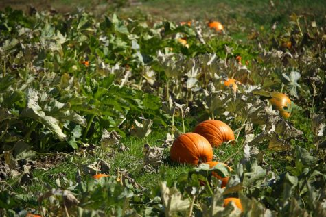 Protect yourself from seasonal blues