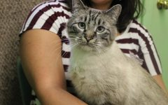 Stray cats neutered for new owners