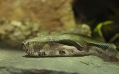 A glimpse behind the glass: The animals of Science I