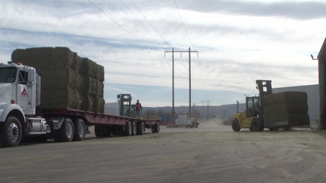 Hay exporters face challenge of moving hay during virus outbreak