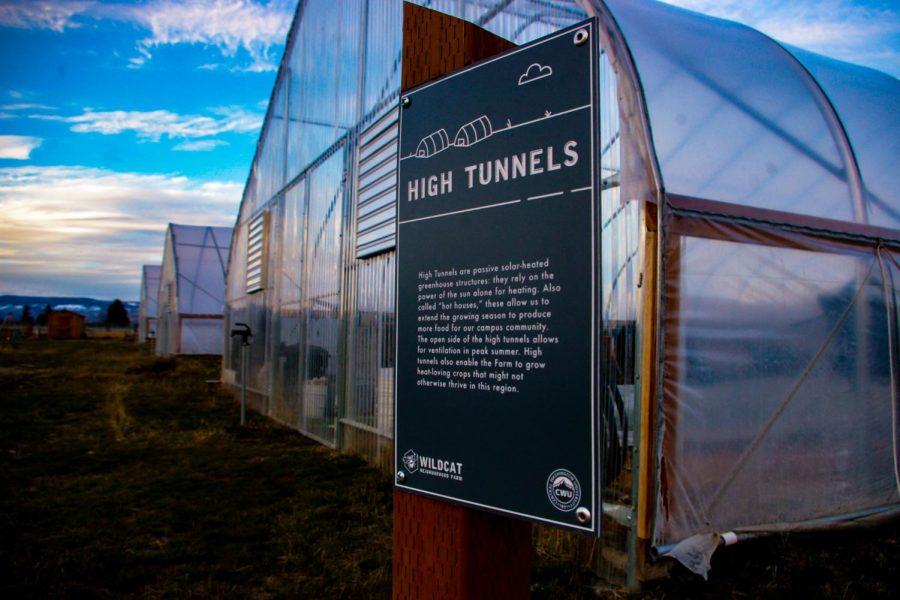 Wildcat Neighborhood Farms opens up garden plots