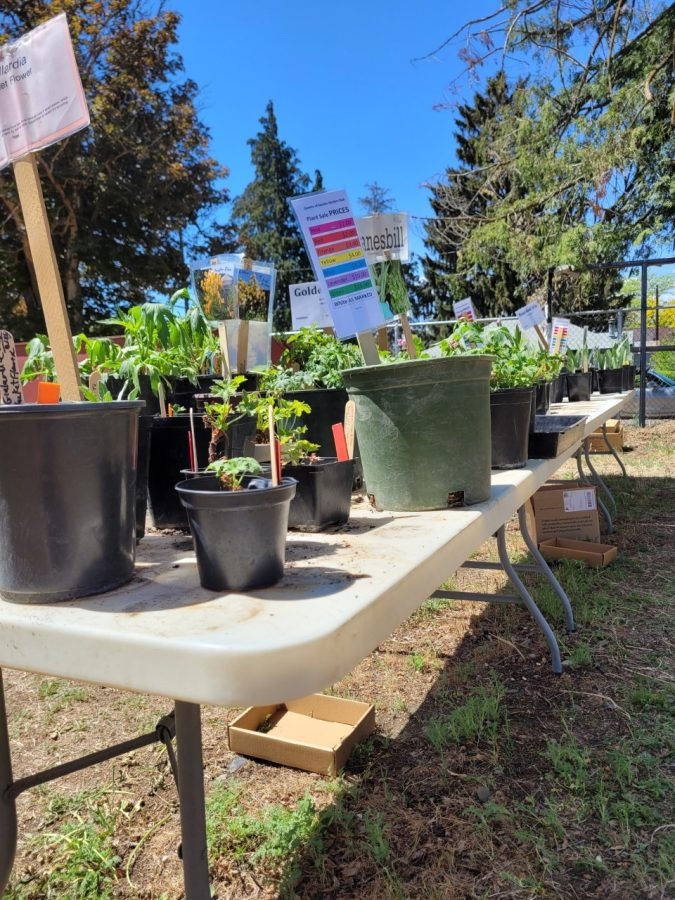 Spring is in the air: Queen of Spades annual plant sale